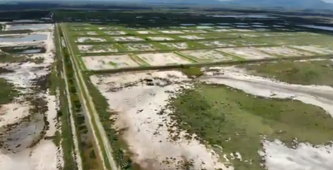 Big plans for Proserpine prawn farm
